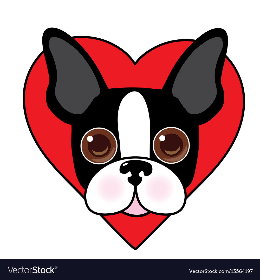 Boston terrier face vector image