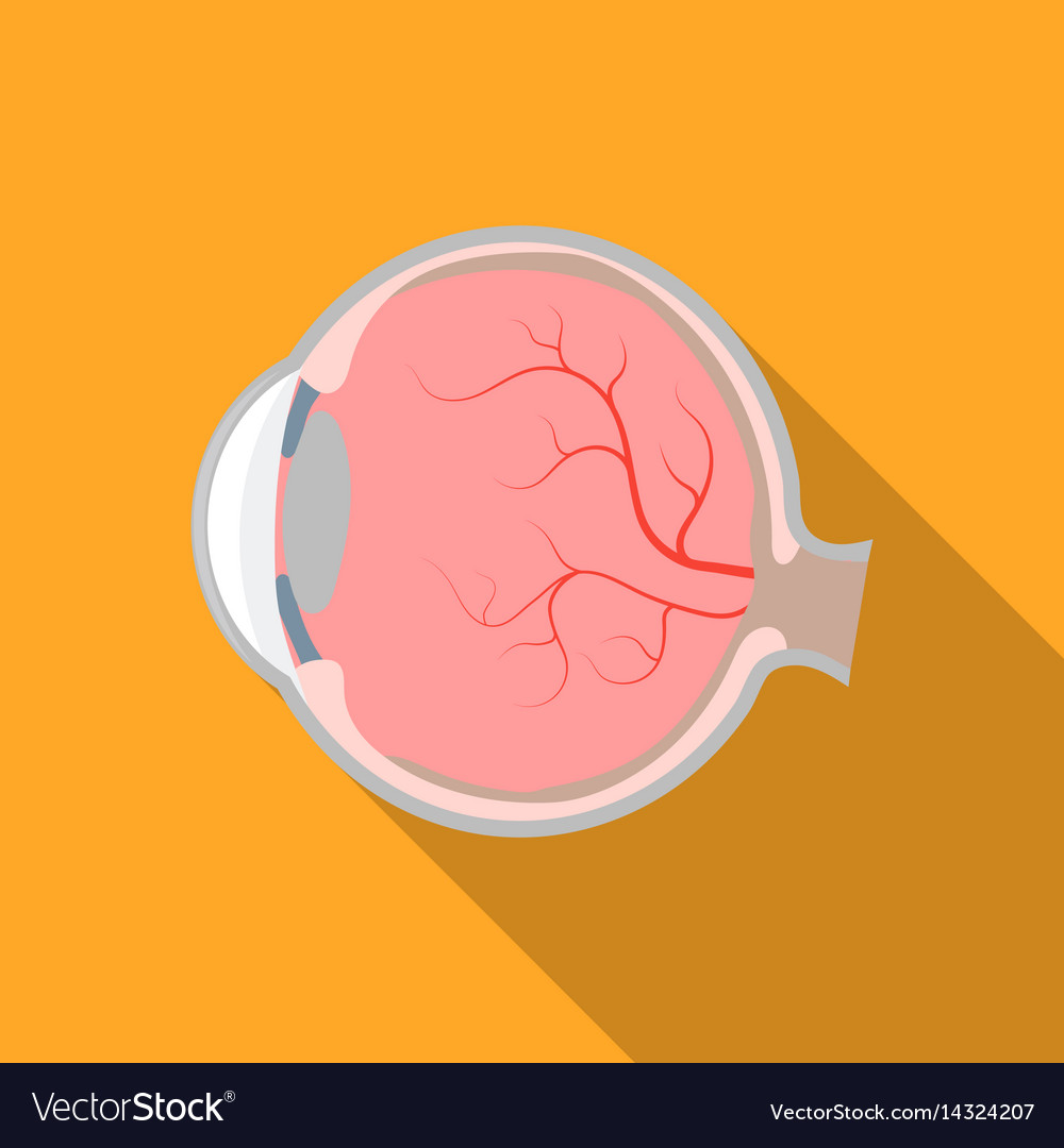 Eyeball icon in flat style isolated on white vector image
