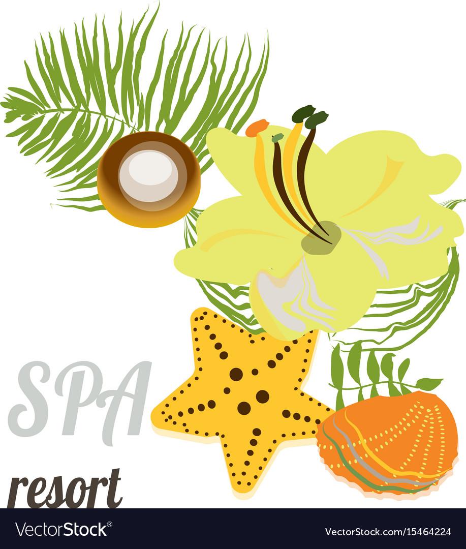 Starfish seashells sea stones and palm leaves vector image