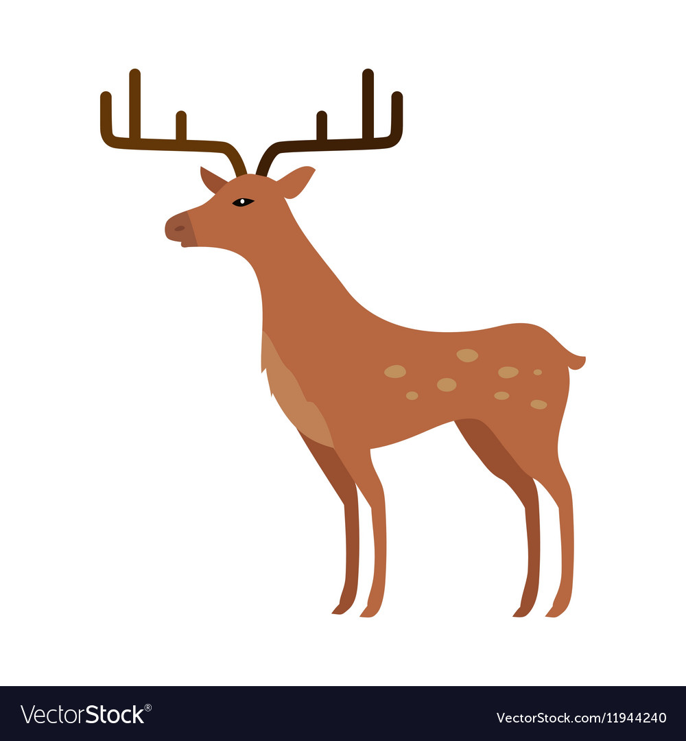 Deer in Flat Style Isolated on White vector image