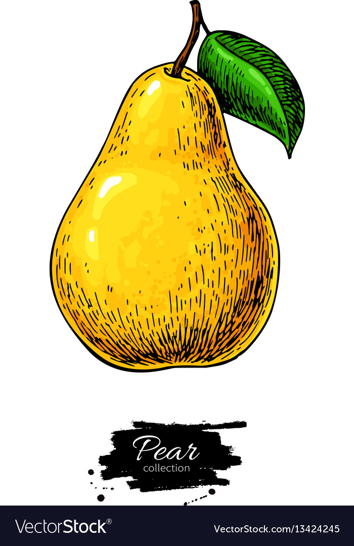 Pear drawing isolated hand drawn object on vector image