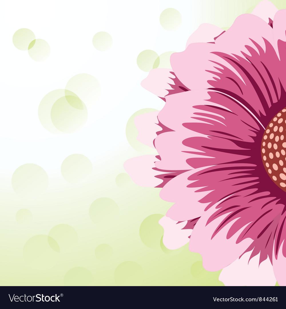 Gerbera daisy vector image