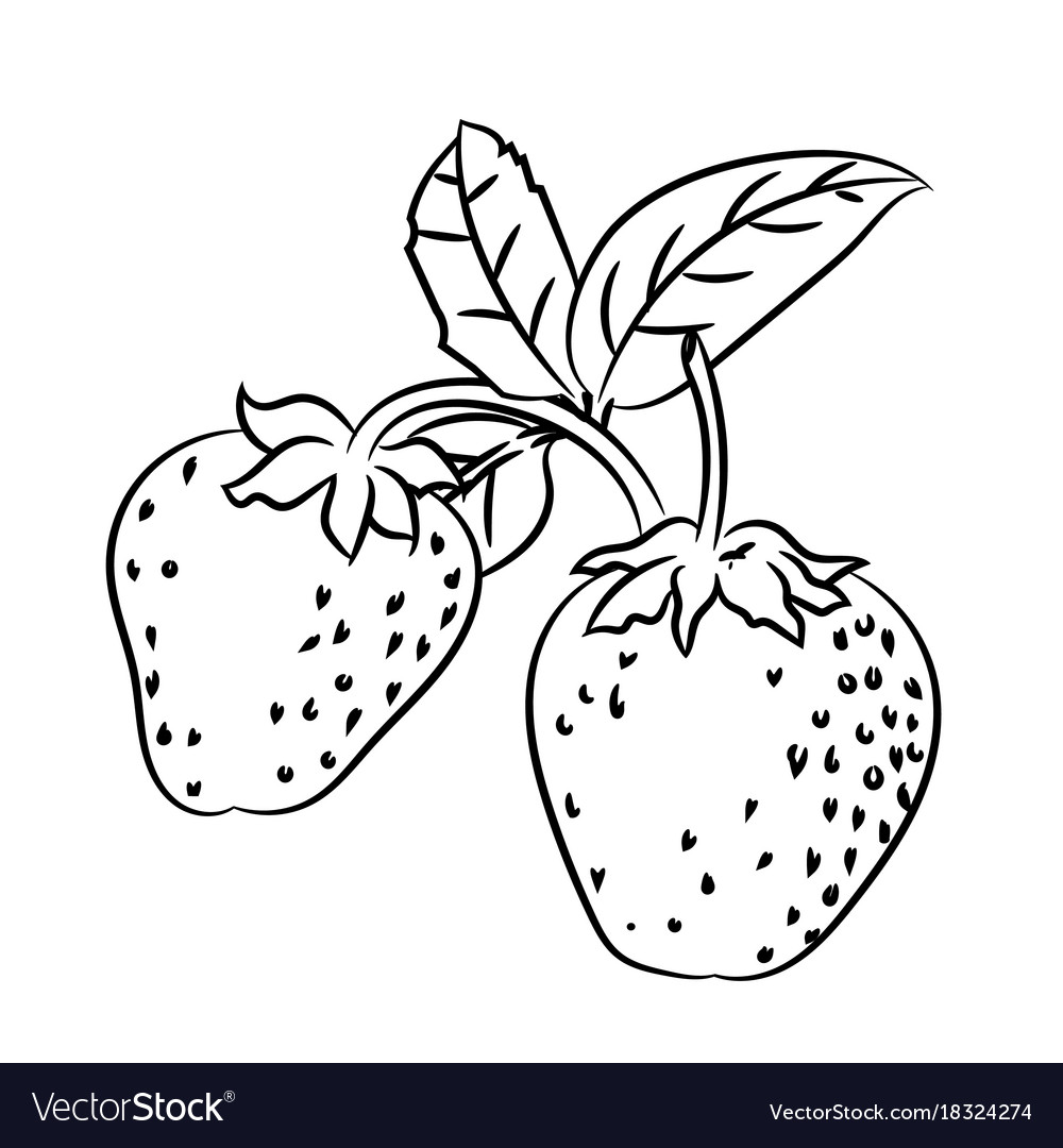 Uncategorized Drawing Of Strawberry line drawing of strawberry simple royalty free vector image