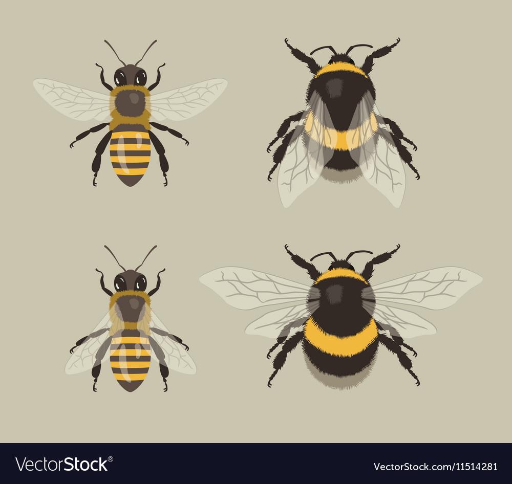 Bee and Bumblebee vector image