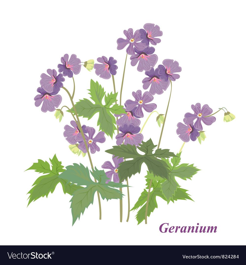 Bush geranium vector image