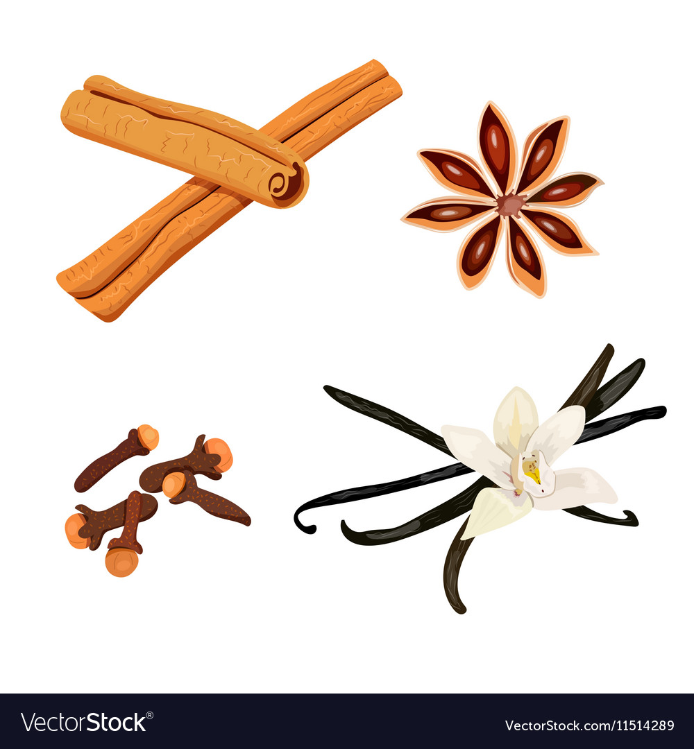 Set of spices vanilla cloves anise cinnamon vector image