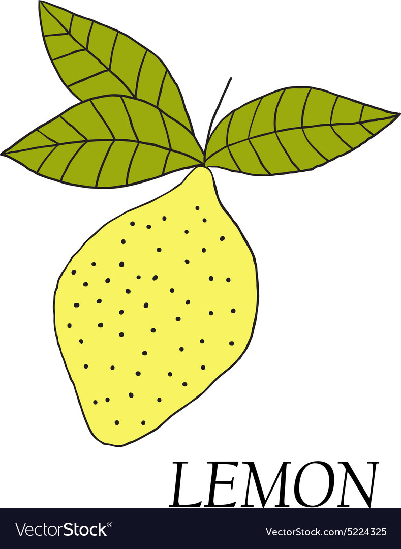 Hand drawn of yellow lemon vector image