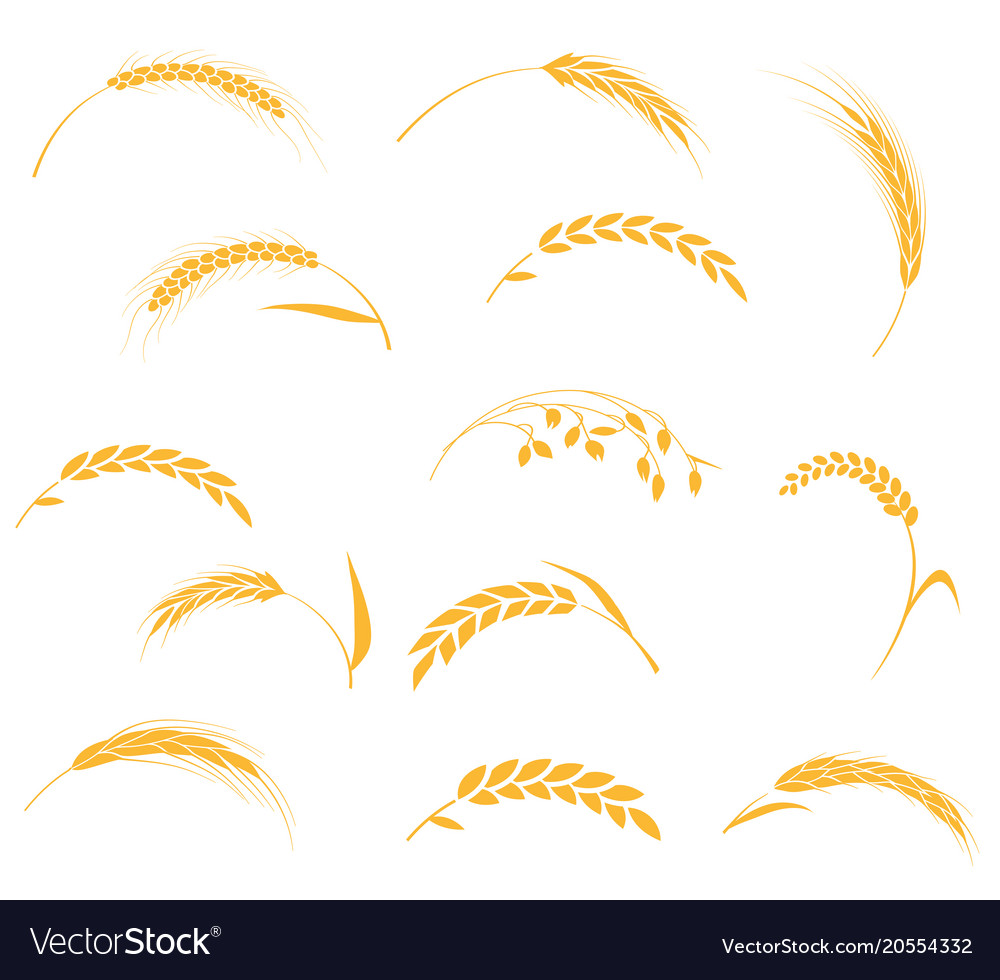 Sheaf of wheat symbolism images symbol and sign ideas ears of wheat bread symbols royalty free vector image ears of wheat bread symbols vector image buycottarizona Choice Image