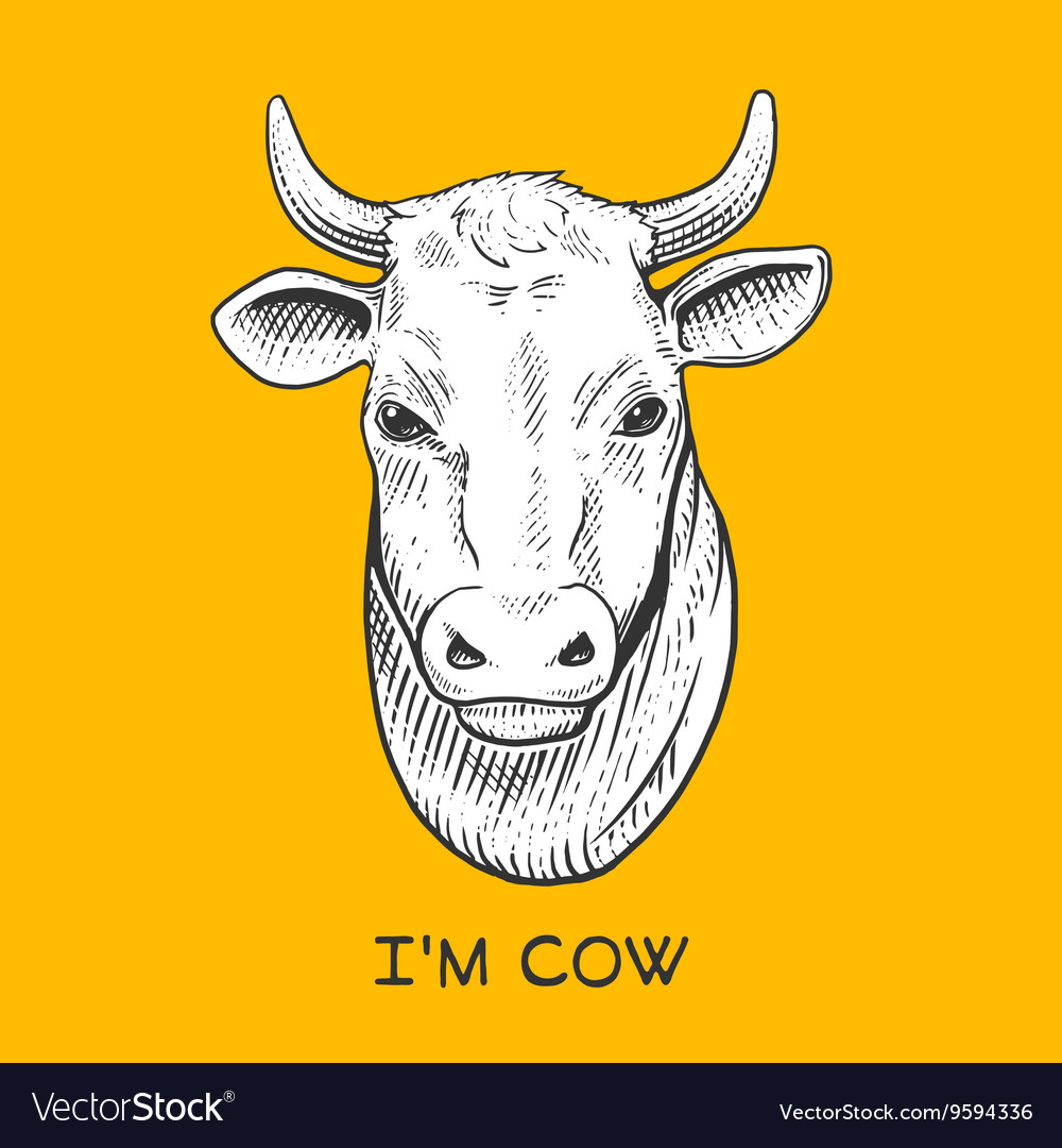 Cow head engraving style vector image