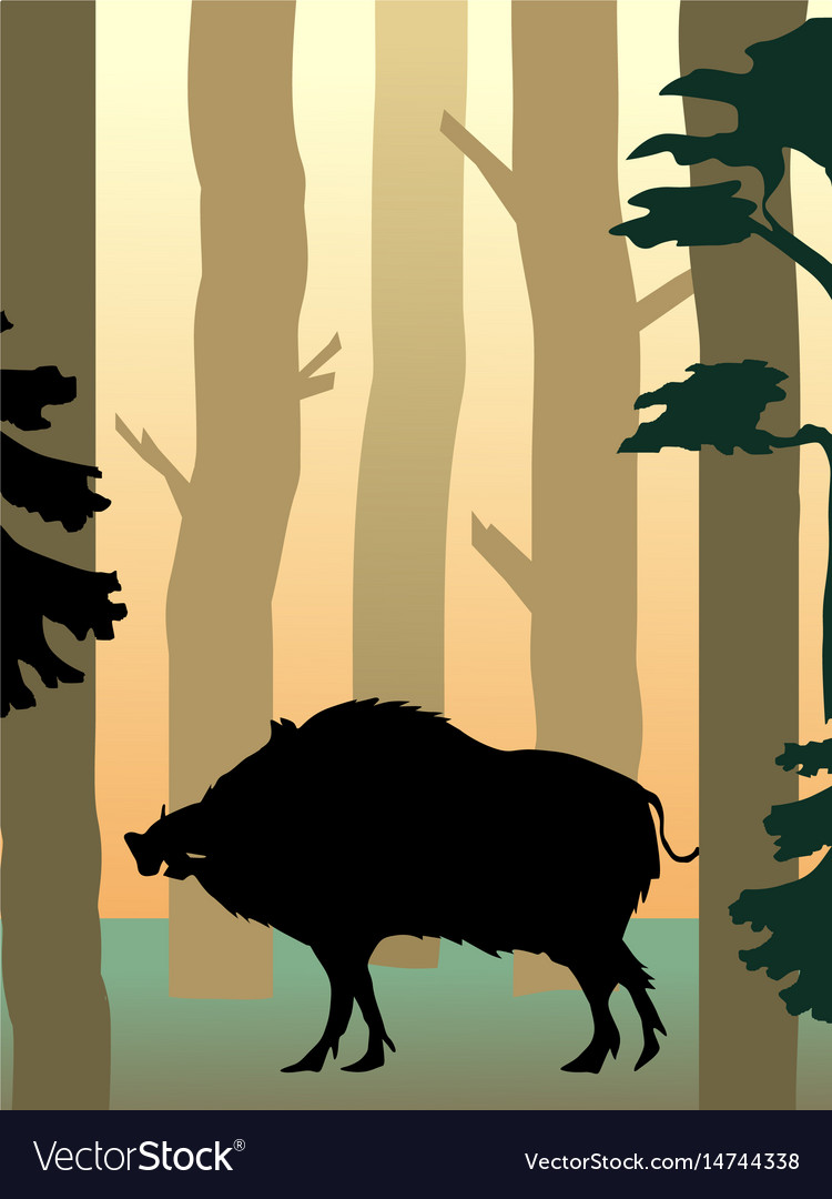 Wild boar in the forest vector image