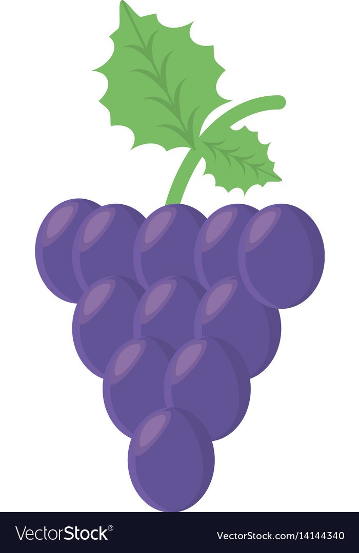 Grape fruit food healthy vector image