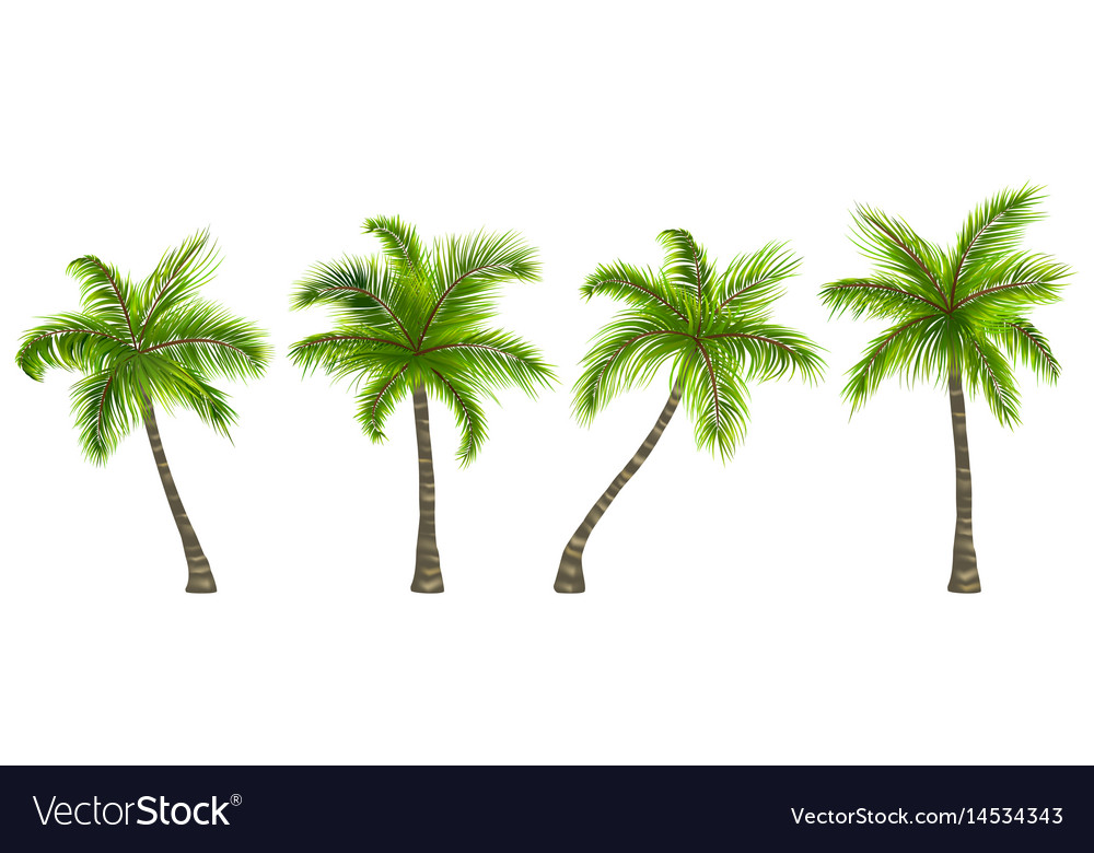 Set realistic palm trees isolated on white vector image