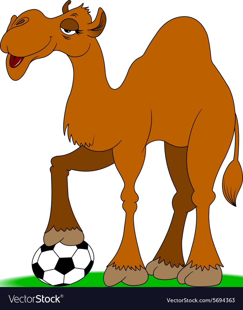 camel with soccer ball royalty free vector image