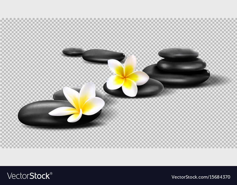 Realistic stones on transparent background vector image