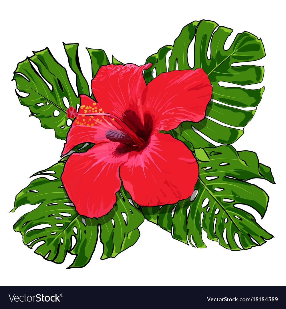 Beautiful tropical flowers bouquet royalty free vector image beautiful tropical flowers bouquet vector image izmirmasajfo Gallery