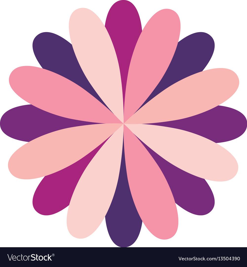 Circular flower formed by petals dark and light vector image