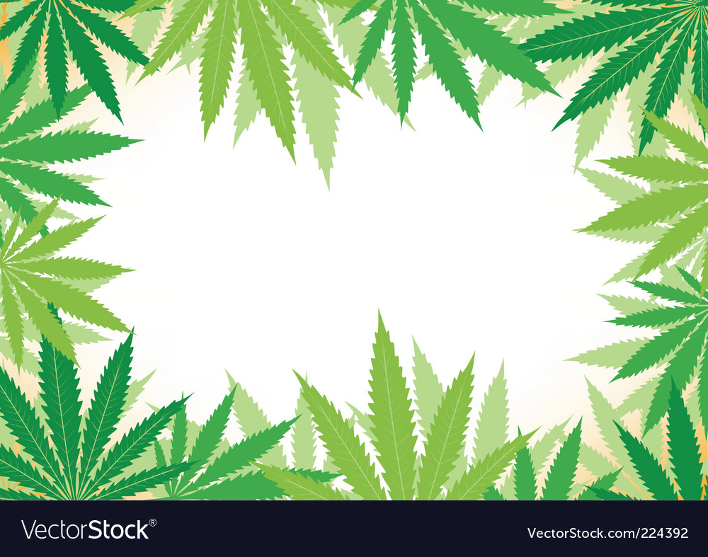 Hemp white background Vector Image