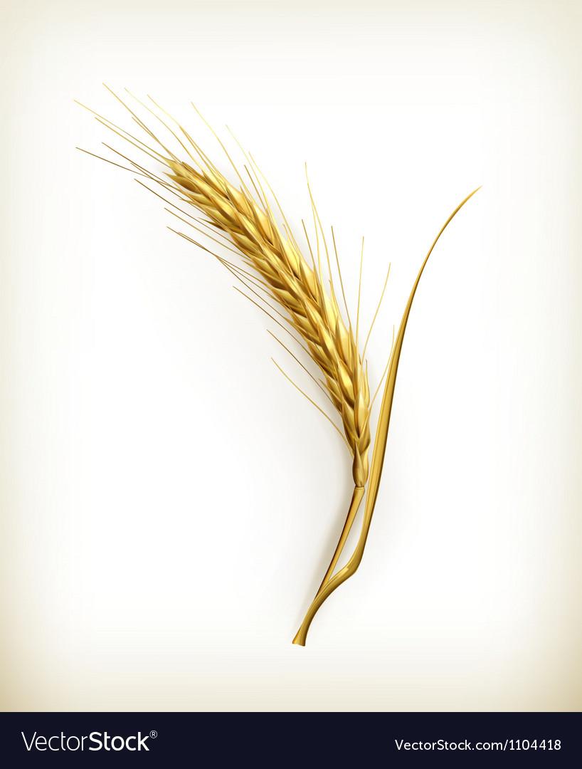 Ear of wheat vector image