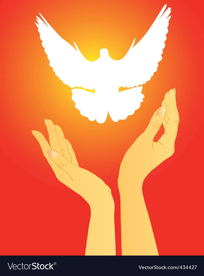 Hands releasing a white dove vector image