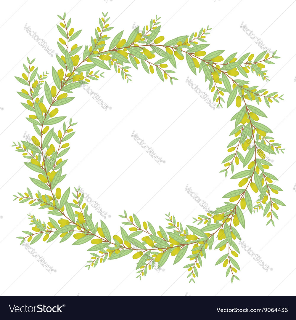 Olive wreath Isolated on white background vector image