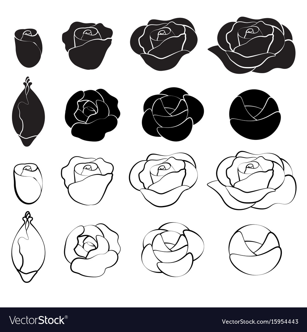 Black rose and white rose royalty free vector image black rose and white rose vector image buycottarizona Choice Image
