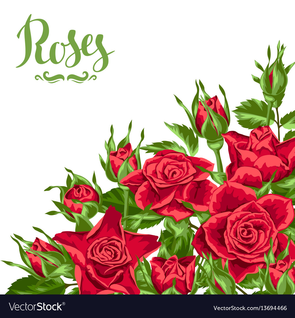 Background with red roses beautiful realistic vector image