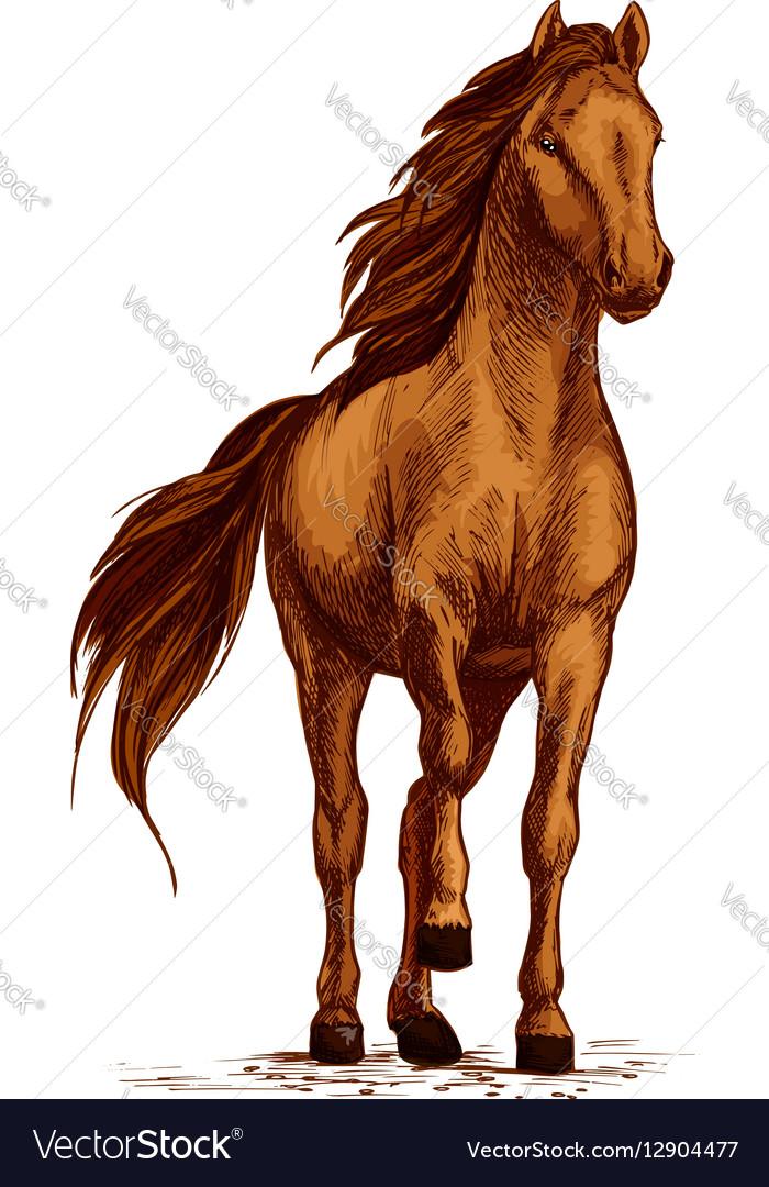 Arabian brown horse stomping hoof sketch vector image