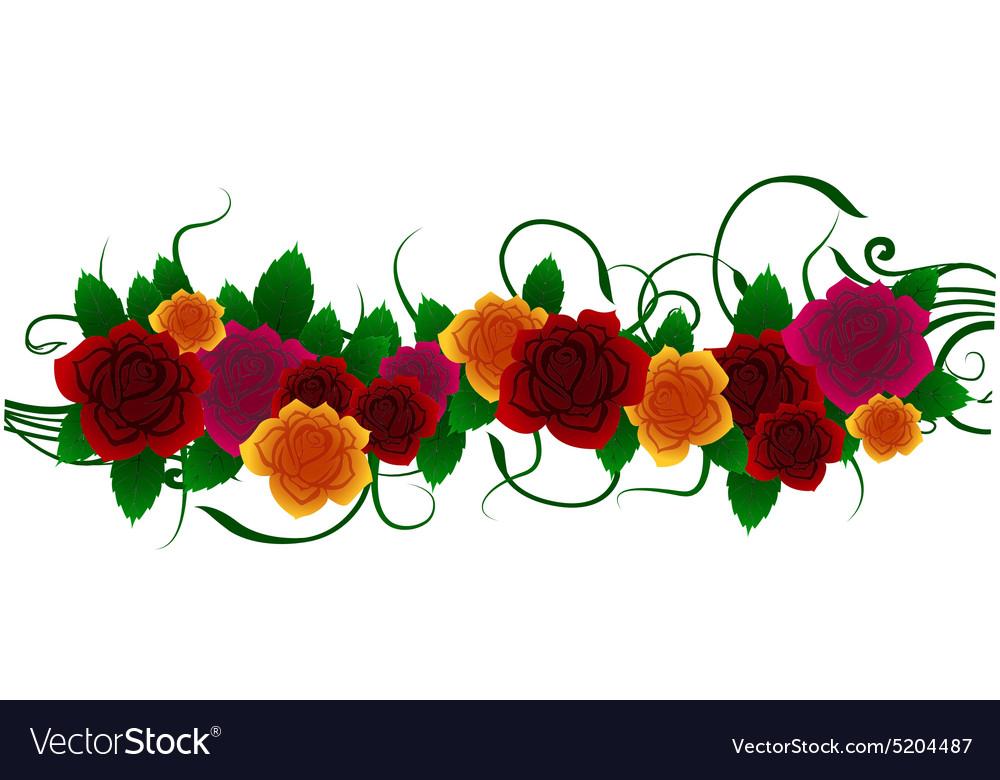 Roses floral design vector image