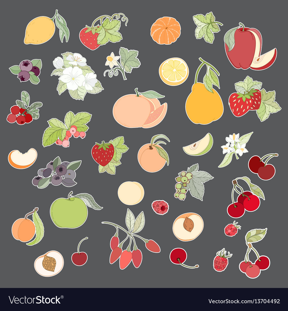 Set of of fruits and berries vector image