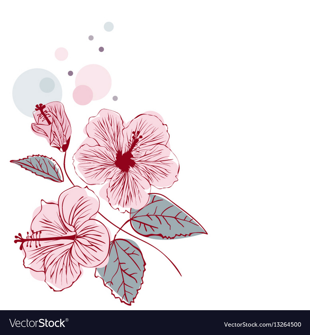 Hibiscus flower on white background vector image