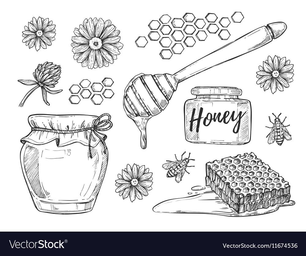 Honey making hand drawn set vector image
