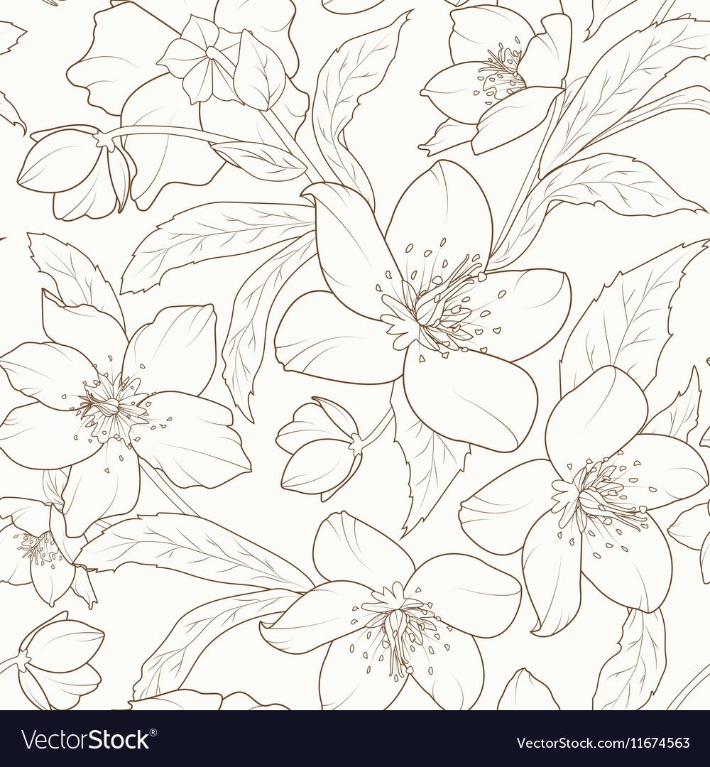 Hellebore winter rose flower foliage pattern brown vector image