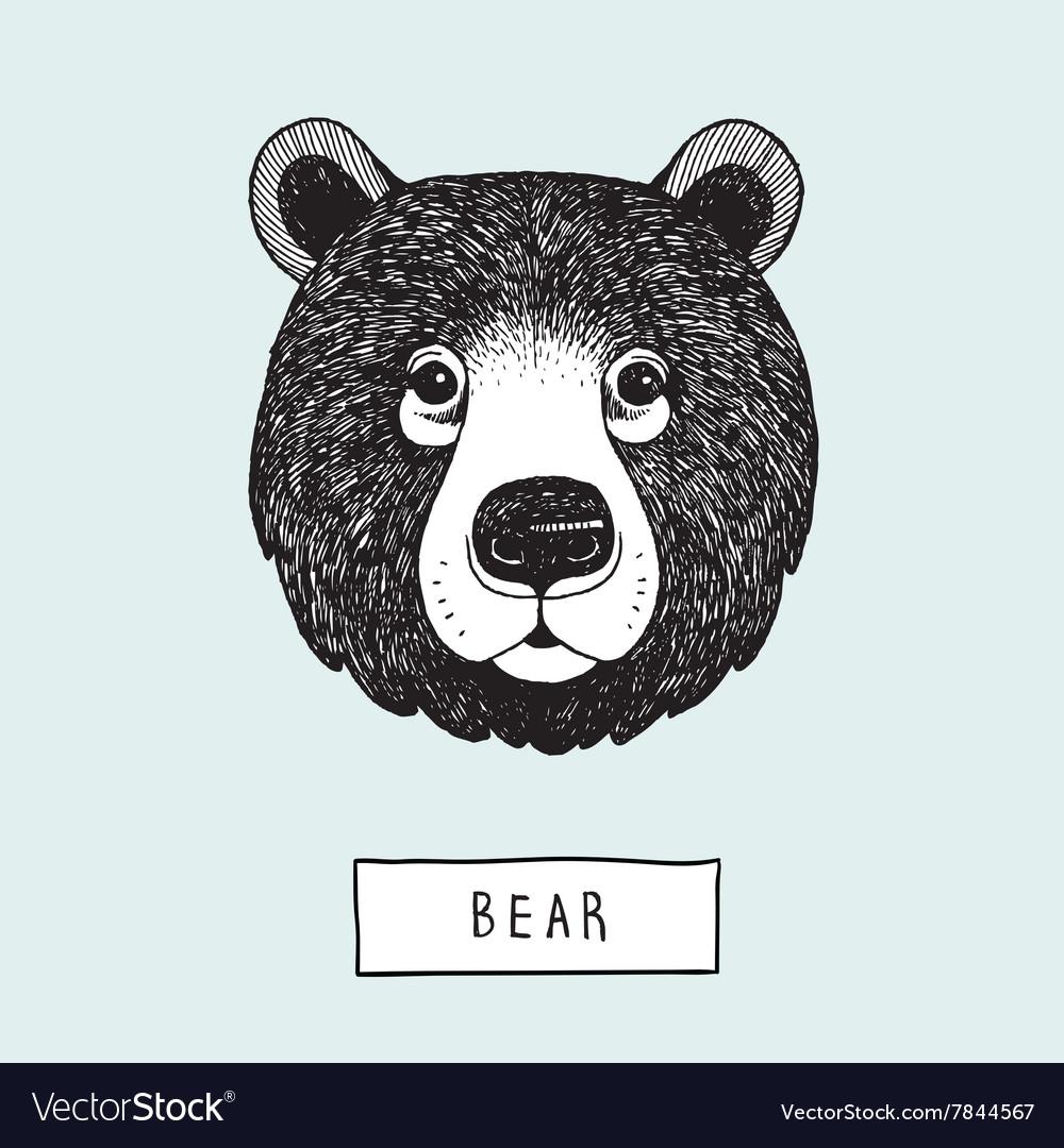 Drawing Bear Head vector image