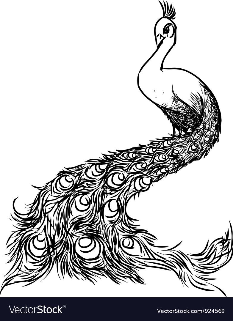 Peacock sketch Vector Image