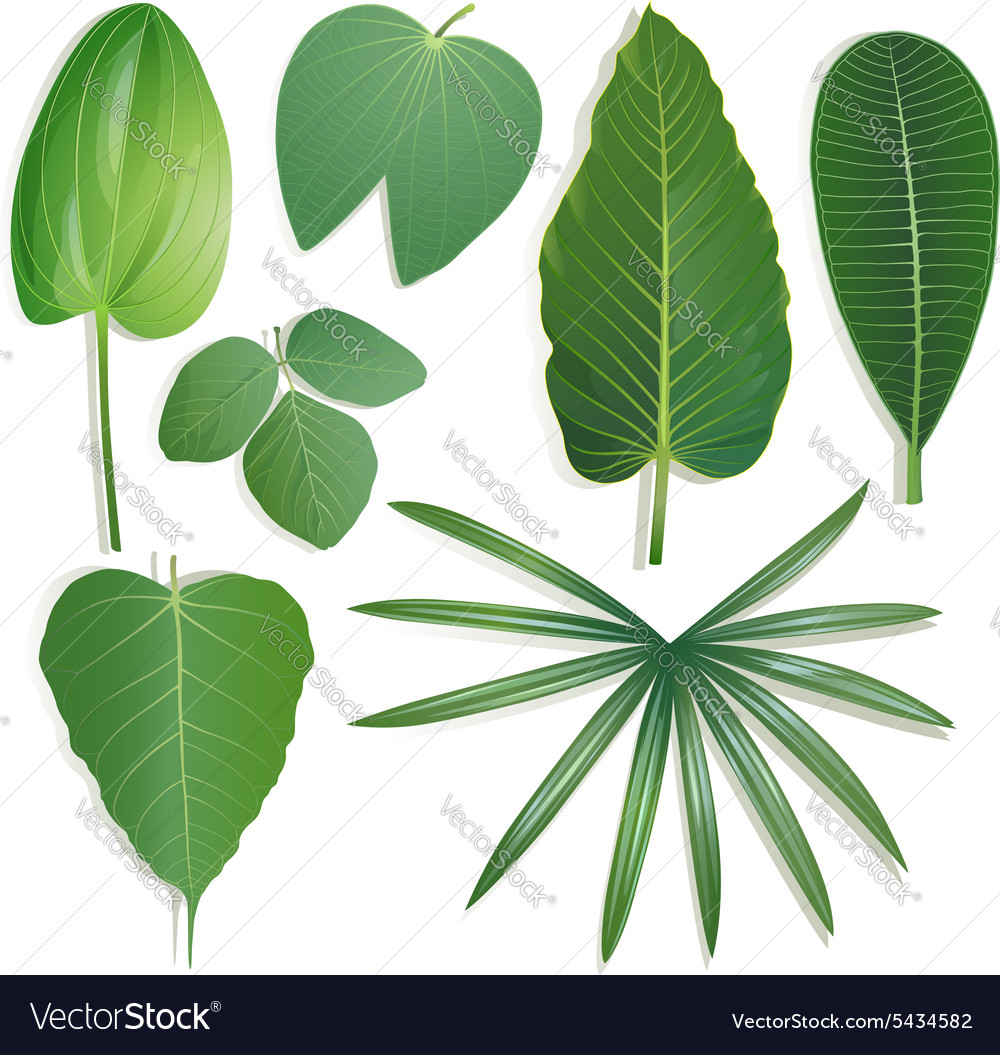 Different shape of leaves Set 2 vector image