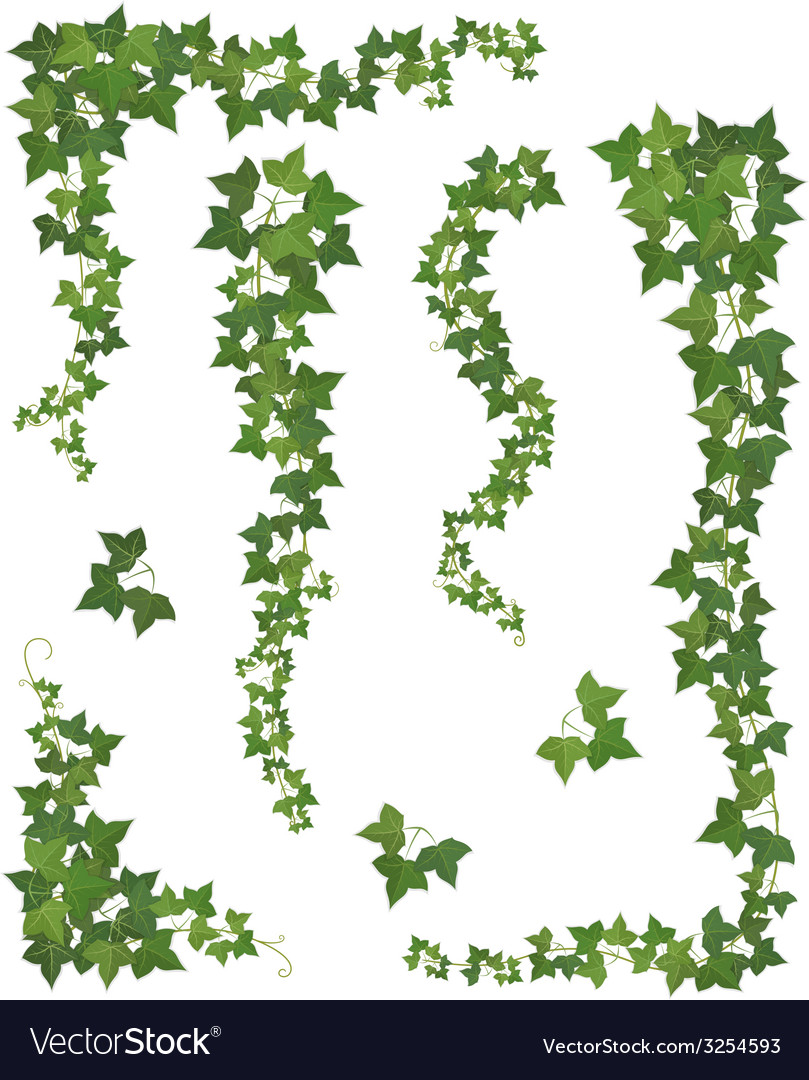 Hanging branches of ivy Set vector image