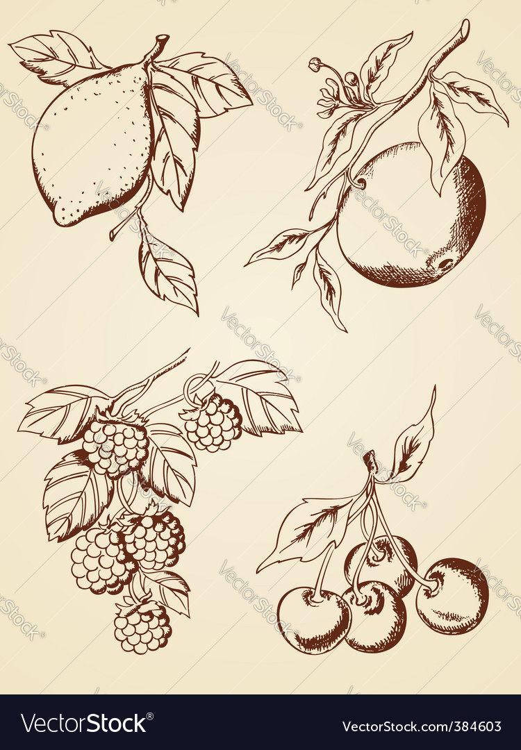 Hand drawn berries and fruits vector image
