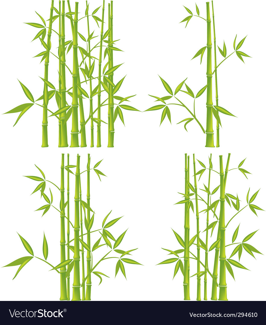Bamboo mesh vector image
