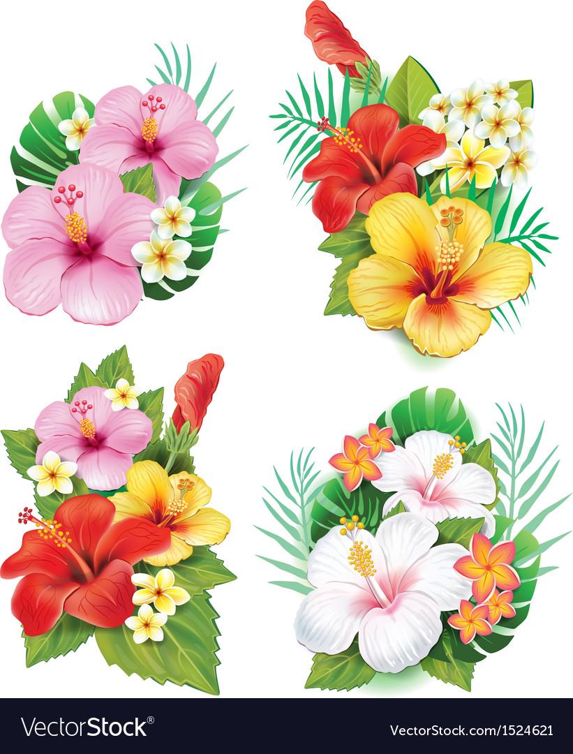 Arrangement from hibiscus flowers royalty free vector image arrangement from hibiscus flowers vector image izmirmasajfo Gallery