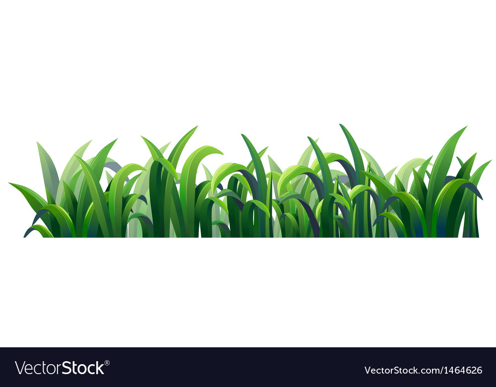 Green elongated grasses vector image