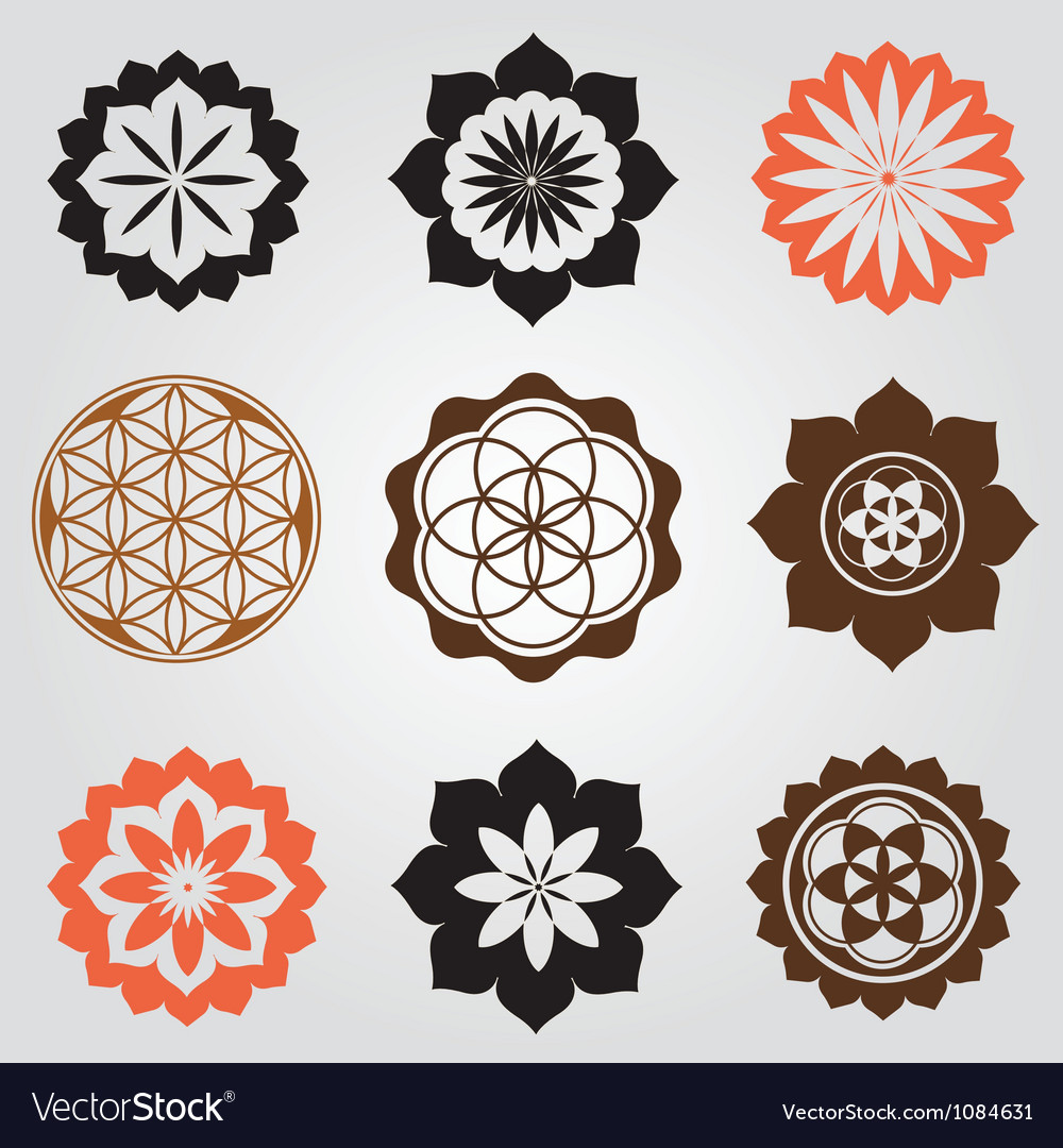 Life seed elements collection vector image