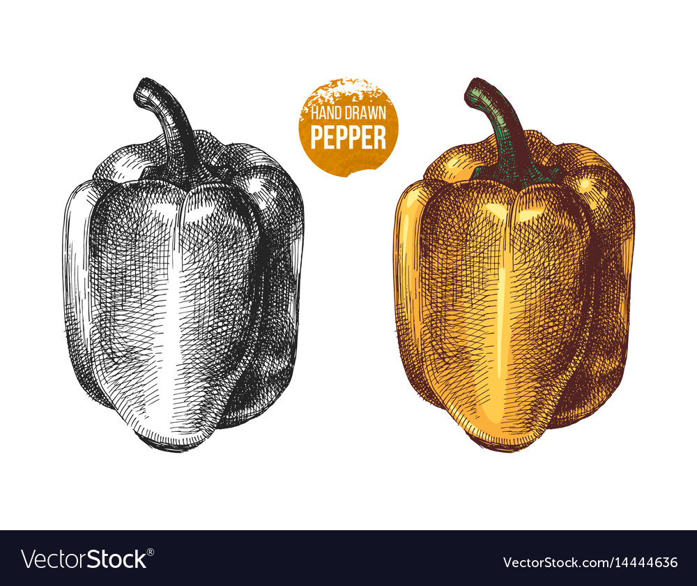 Hand drawn sweet peppers vector image