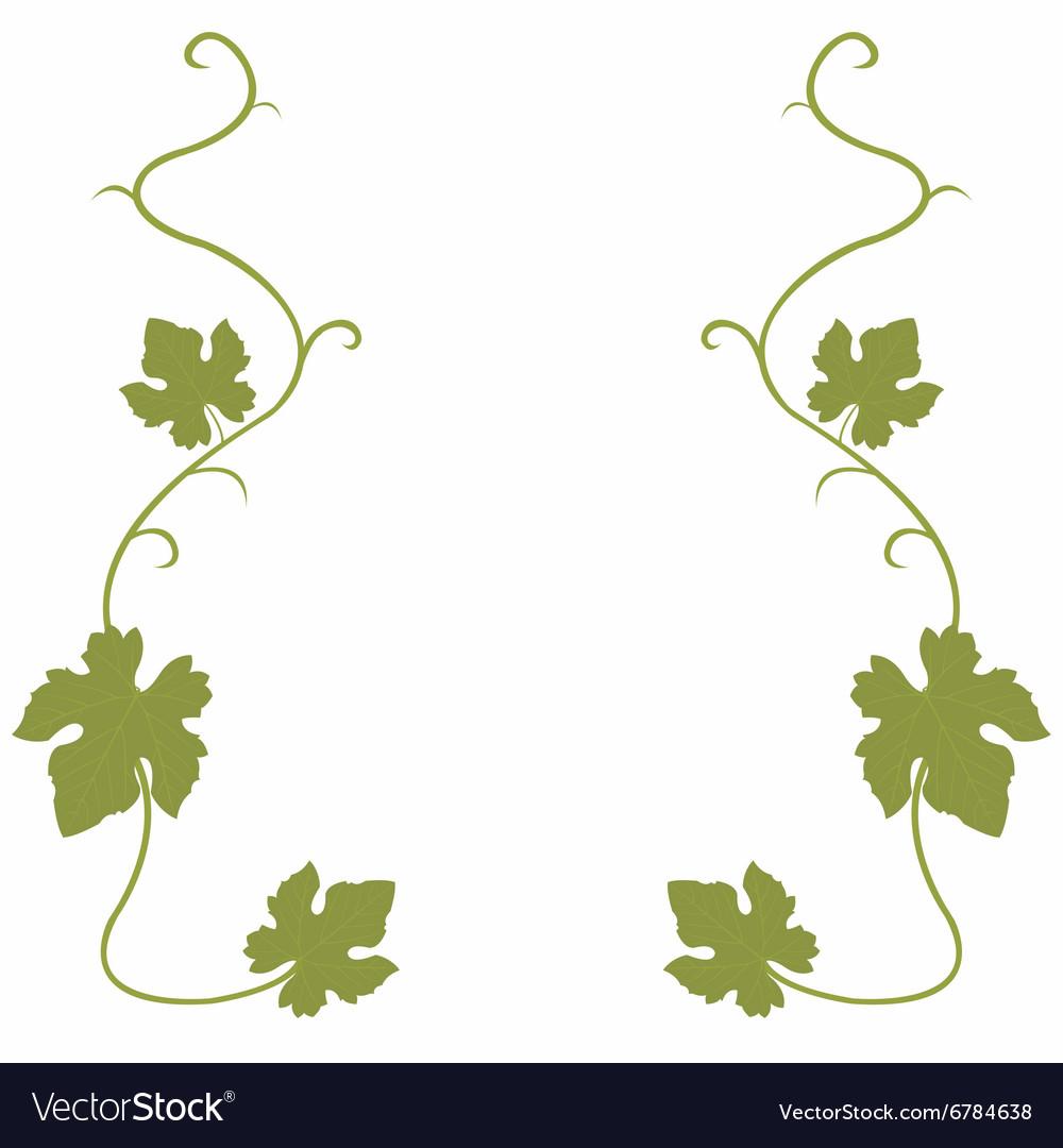 Grapes vine background vector image