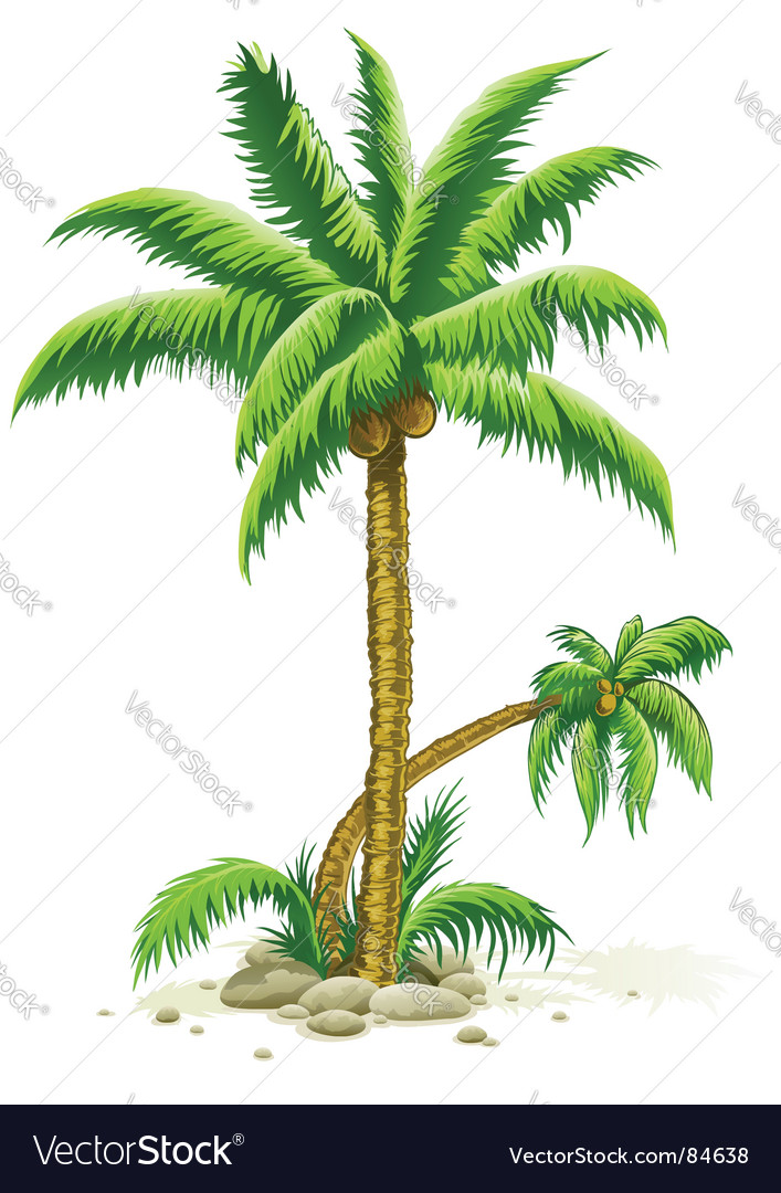 Palm trees with coconut fruits vector image