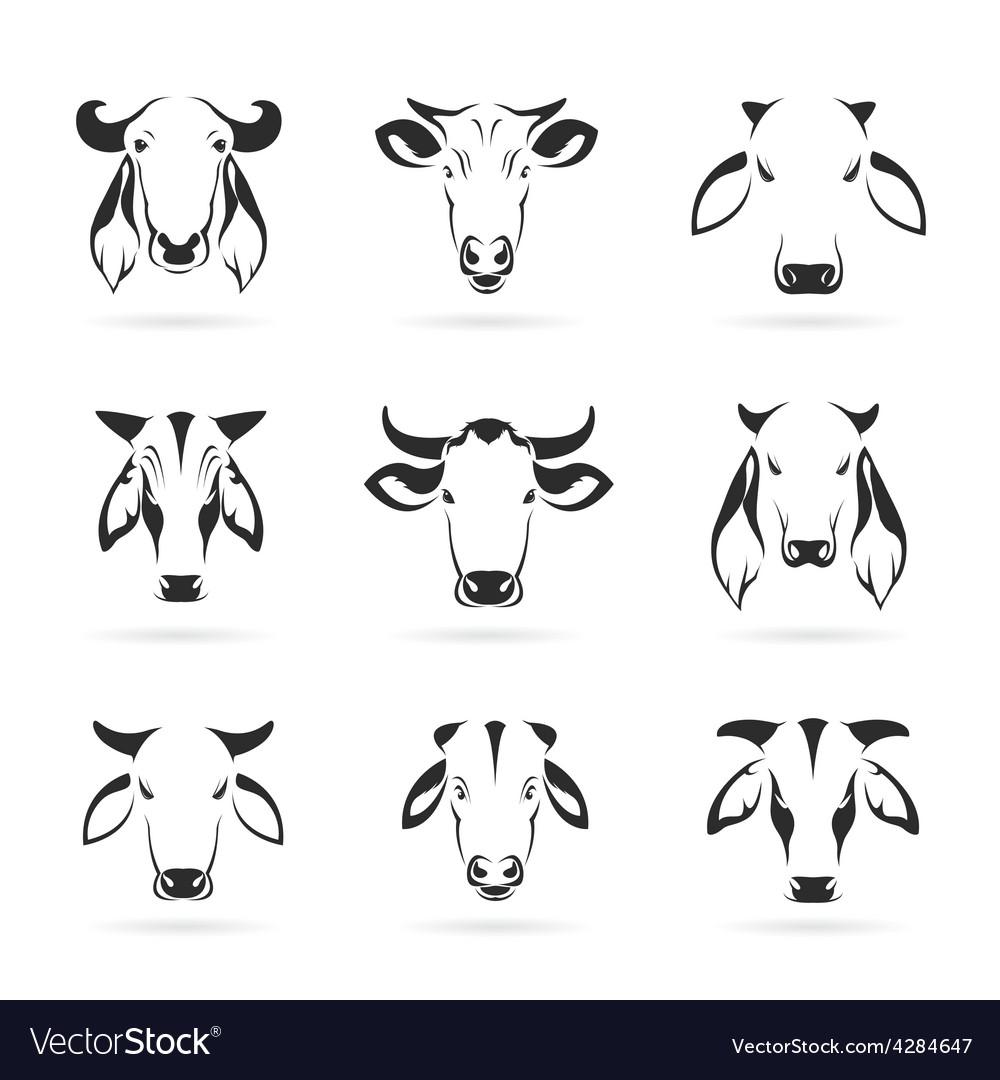set of cow head royalty free vector image vectorstock