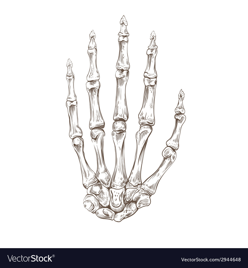 Hand drawing skeleton hand vector image