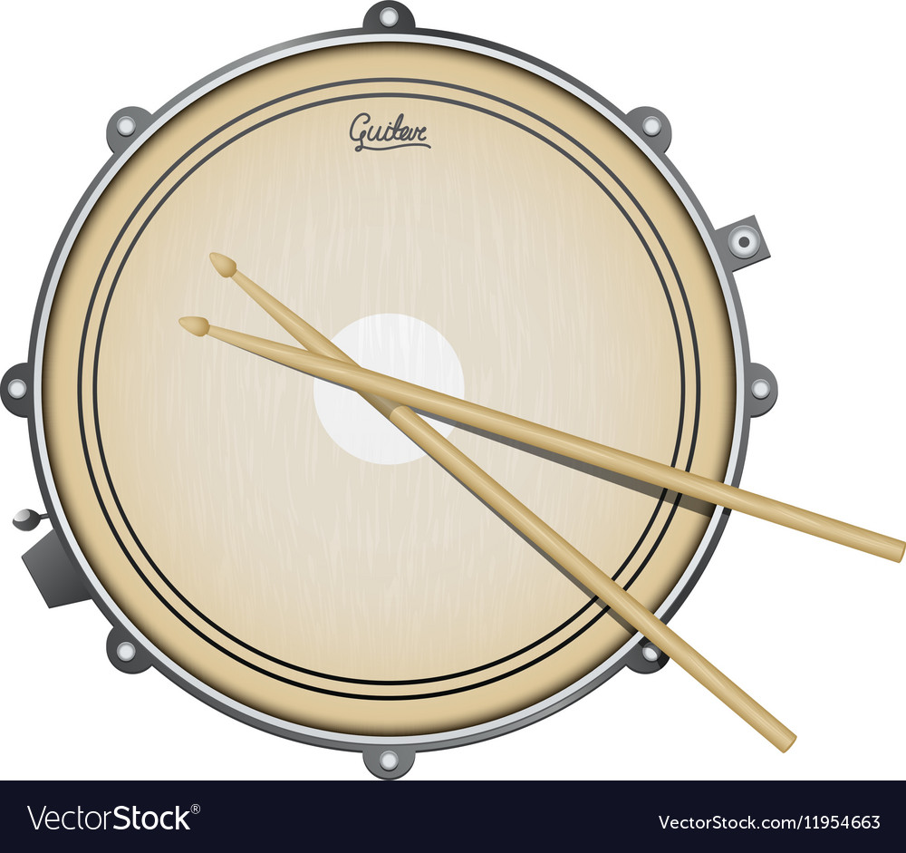Snare drum realistic with vector image