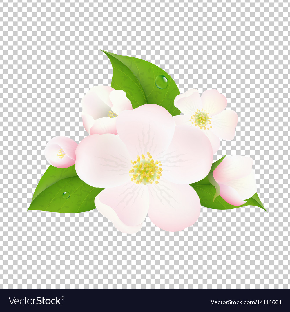 apple tree flowers with transparent background vector 14114664