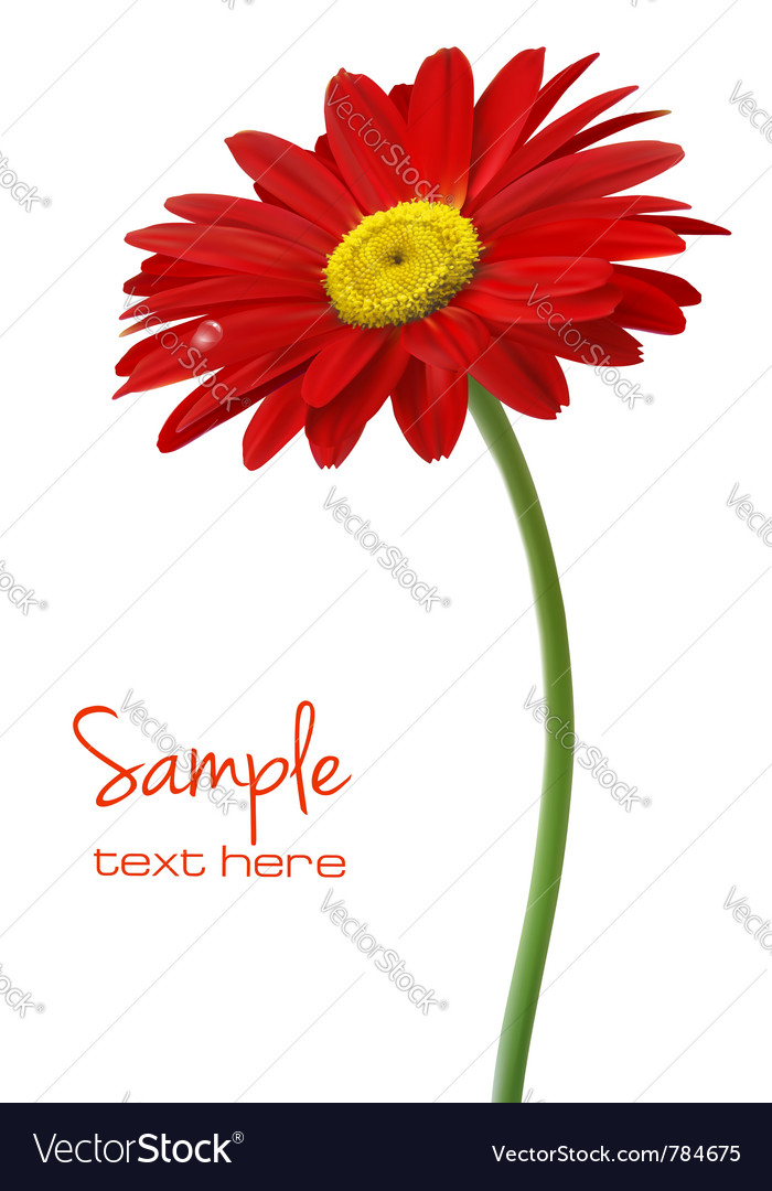 Beautiful red flower vector image
