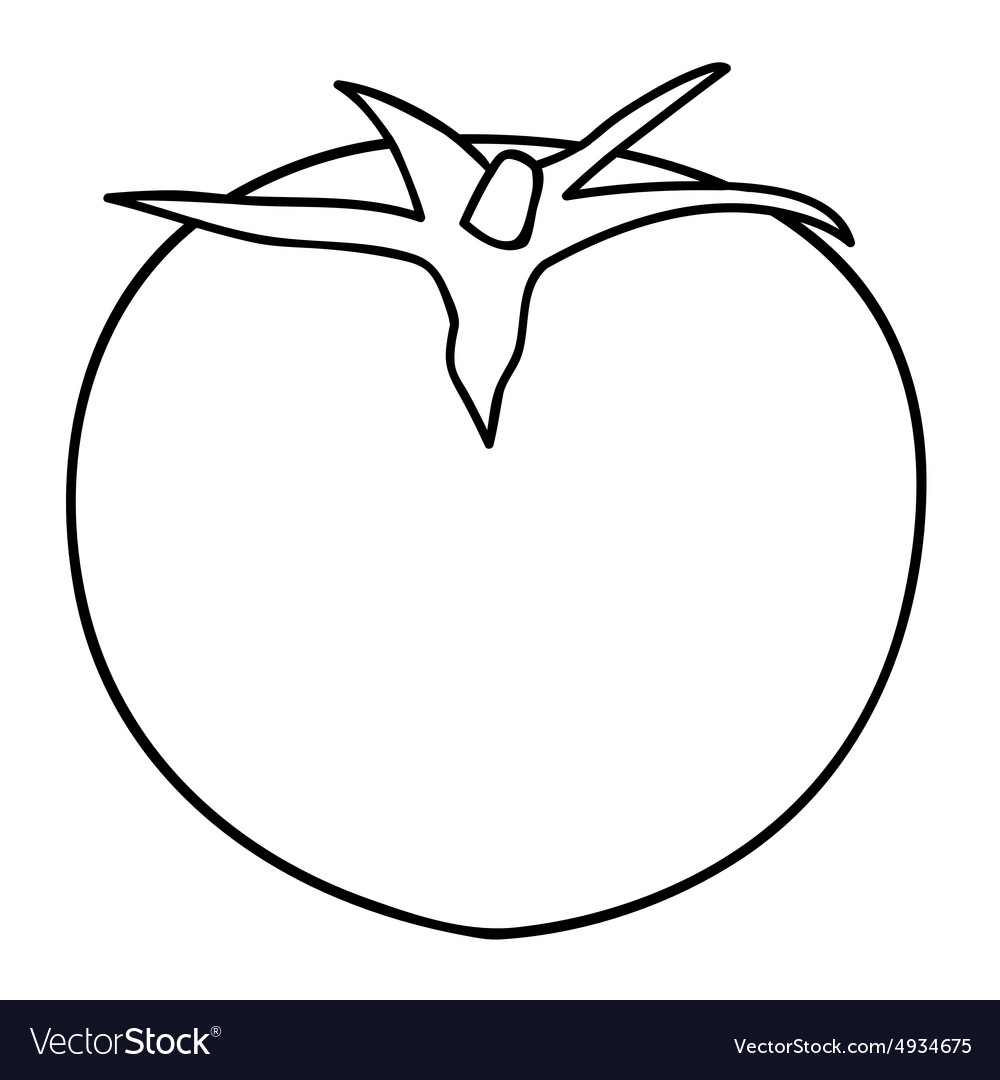 Sketch Line Drawing Of Tomato Royalty Free Vector Image